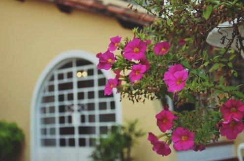 Petúnias roubam a cena no Hotel Santa Amália, Vassouras.