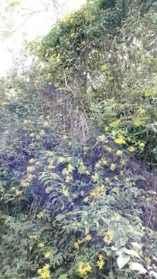 Embelezando a paisagem, as flores, que são confundidas com mato, embelezam o sítio onde é produzida a cachaça Werneck.