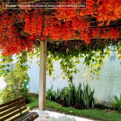 Terraço da Florart colorido com a floração de mucuna vermelha.