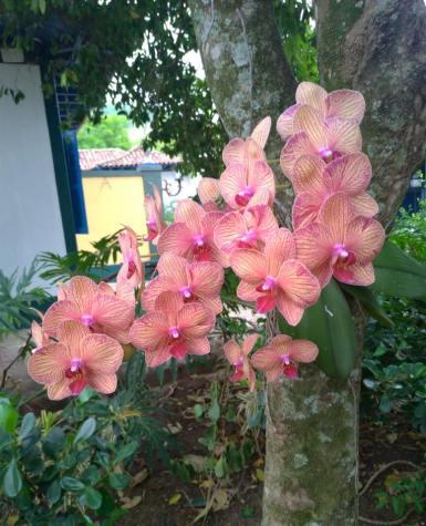 Orquídeas embelezam a Fazenda São Luiz da Boa Sorte.