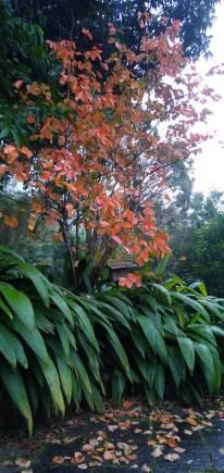 Folhas coloridas no outono.