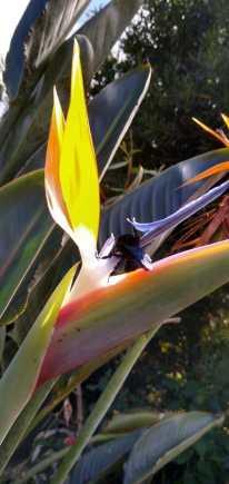 Besouros abelhas e borboletas: polinizadores atraidos pelos flores.